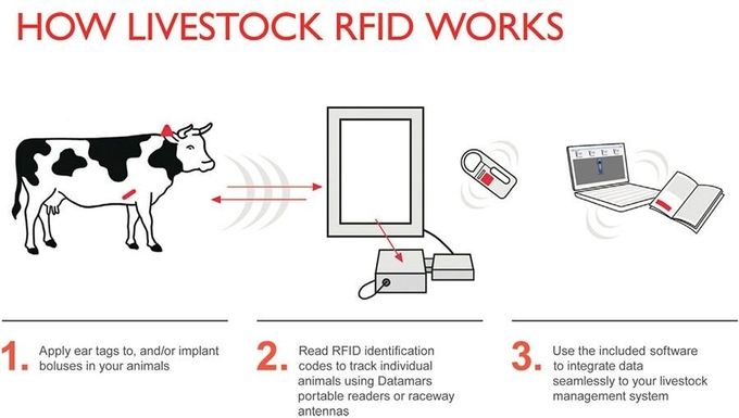 Iso18000 6c Uhf Passive Rfid Tags Livestock Cattle Ear